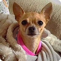 Adopt A Pet :: Lolita - San Diego, CA