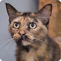 Adopt A Pet :: Gracie - O Fallon, IL