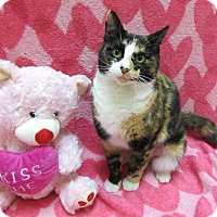Adopt A Pet :: DEJA - Lexington, NC