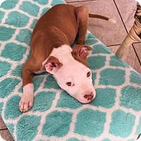 Adopt A Pet :: Forest - Dallas, GA