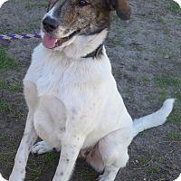 Adopt A Pet :: Rose - Manning, SC