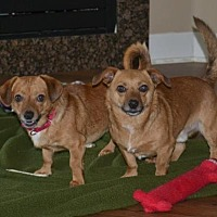 Adopt A Pet :: Curly and Moe (can be adopted separately) - Springfield, OR