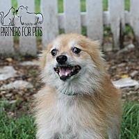 Adopt A Pet :: The Donald (Fostered) - Troy, IL