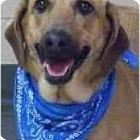 Adopt A Pet :: Baby - Seattle, WA