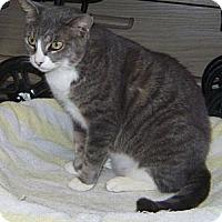 Adopt A Pet :: Shadow Lee - Delray Beach, FL