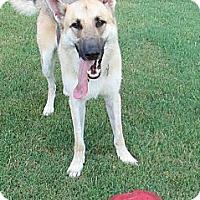 Adopt A Pet :: Samson - Pike Road, AL