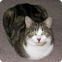 Adopt A Pet :: Nici - Vancouver, BC