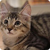 Adopt A Pet :: Mitch - Sacramento, CA