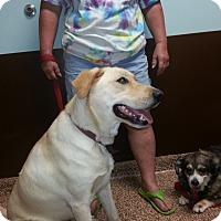 Adopt A Pet :: Alice - Columbus, IN