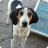 Adopt A Pet :: Oliver - Orange Lake, FL