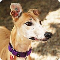Adopt A Pet :: May - Ware, MA