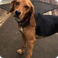 Adopt A Pet :: Leah - Knoxville, TN
