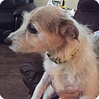 Adopt A Pet :: Bella in Houston - Austin, TX