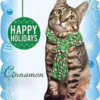 Adopt A Pet :: Cinnamon - East Brunswick, NJ