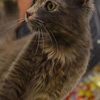 Adopt A Pet :: Casey - Vacaville, CA