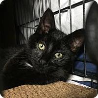 Adopt A Pet :: Luigi - New York, NY