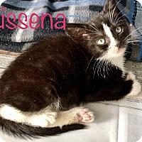 Adopt A Pet :: Kissena - Island Park, NY