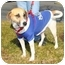 Photo 3 - Foxhound Mix Dog for adoption in Richmond, Virginia - Sweet Pea