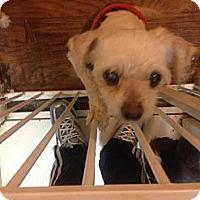 Adopt A Pet :: Bobby - San Diego, CA