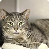 Adopt A Pet :: Antero - Chicago, IL
