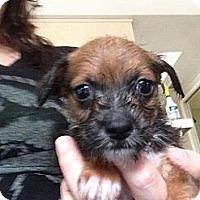 Adopt A Pet :: Ben - pasadena, CA