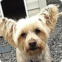 Adopt A Pet :: Bingo - Rigaud, QC