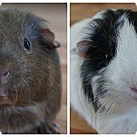 Adopt A Pet :: Carly & MooMoo - Brooklyn Park, MN