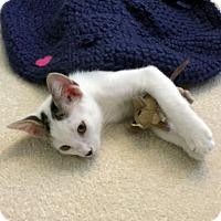 Adopt A Pet :: Chibs - Deerfield Beach, FL