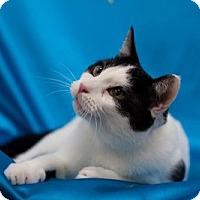 Adopt A Pet :: Greenville - Alexandria, VA