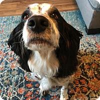 Adopt A Pet :: Emma/Courtesy Post/Adopted! - Kannapolis, NC