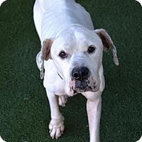 Adopt A Pet :: Chew Chew - Lakeland, FL