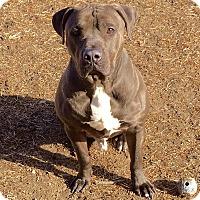 Adopt A Pet :: Rocky - Port Jervis, NY