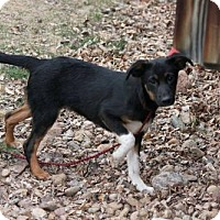 Adopt A Pet :: Perry - Littleton, CO