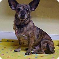 Adopt A Pet :: Mouse in the House - 9 lbs - Dahlgren, VA