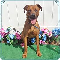 Adopt A Pet :: HERCULES - Marietta, GA