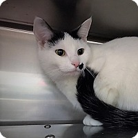 Adopt A Pet :: Truffles - Monroe, MI