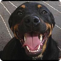 Adopt A Pet :: Sherwood - Bastrop, TX
