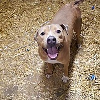 Adopt A Pet :: HAPPY JACKS - Speedway, IN