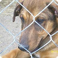 Adopt A Pet :: Pedro - Mexia, TX