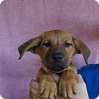 Adopt A Pet :: Malibu - Oviedo, FL