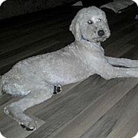 Adopt A Pet :: Coop - Cincinnati, OH