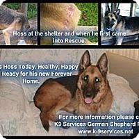 Adopt A Pet :: Hoss - Green Cove Springs, FL