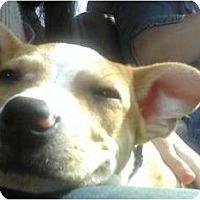 Adopt A Pet :: Sammy - Sand Springs, OK