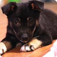 Adopt A Pet :: Watson - Sacramento, CA