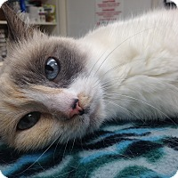 Adopt A Pet :: Yuki - Newport Beach, CA