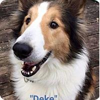 Adopt A Pet :: Deke - COLUMBUS, OH