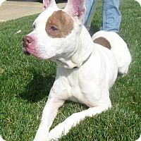 Adopt A Pet :: Roxy - Springfield, IL