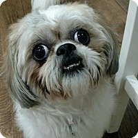 Adopt A Pet :: Dash - Atlanta, GA