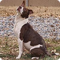 Adopt A Pet :: Layla - Lincolnton, NC