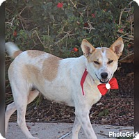 Adopt A Pet :: Peaches - Phoenix, AZ